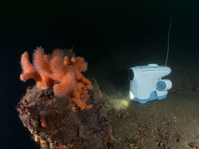 Да надникнем в морските дълбини с подводния дрон Blueye Pioneer